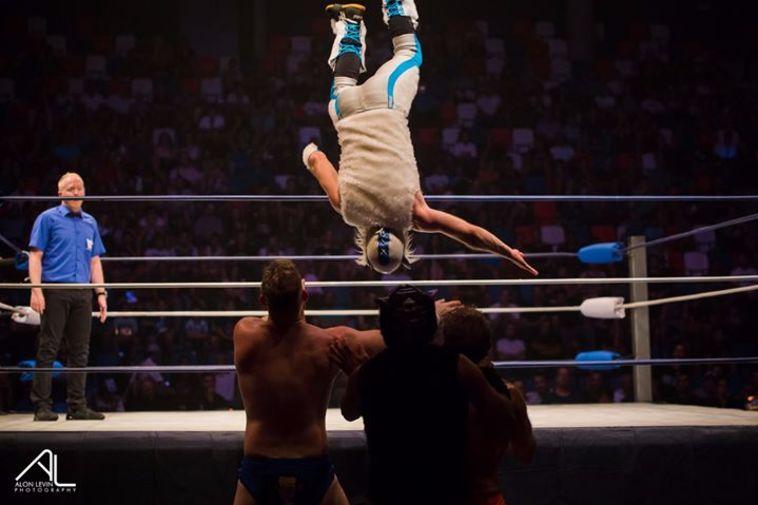 הנמר הלבן קופץ מעל החבלים על הקראשרס (אלון לוין, IWL)