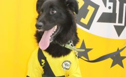 כלב בחולצת מכבי נתניה